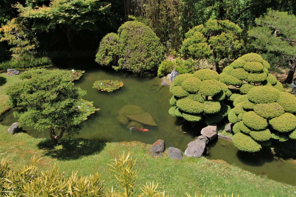 Find Peace in the Japanese Tea Garden