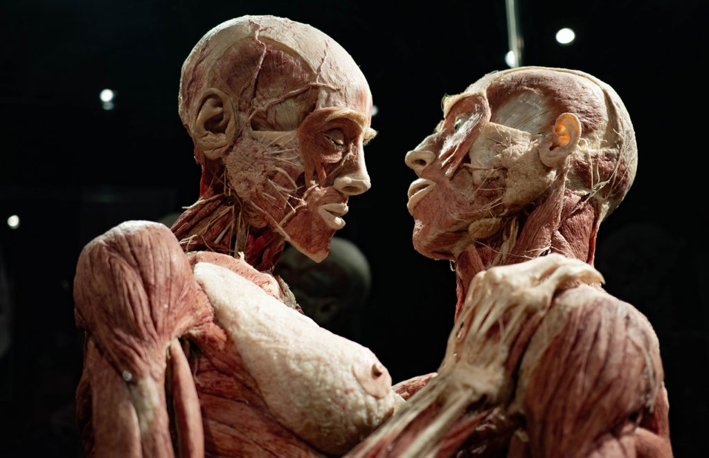 Human Body at Body Worlds