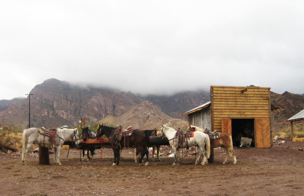 Ride horses and be a rancher for a day.